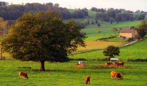 La campagne, c'est beau ! ;-)